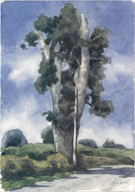 Pioppo potato, 1988